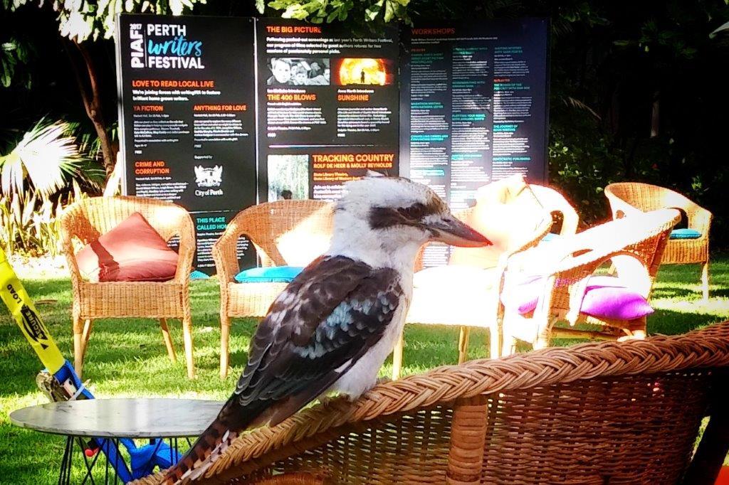 kookaburra-at-pwf-002